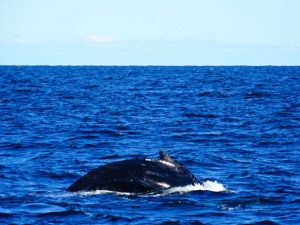 Indian Summer-New England-Massachusetts-Cape Ann-Gloucester-Whale Watching #indiansummer #newengland #massachusetts #capeann #gloucester #whalewatching