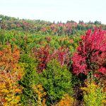 Indian Summer - New England - Things To Do In New Hampshire - White Mountains National Forest - Kancamagus