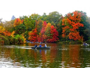 New York City - Central Park - Lake #fallfoliage #indiansummer #travel #solo #thingstodo