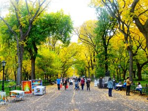 New York City - Central Park People walking #fallfoliage #indiansummer #travel #solo #thingstodo