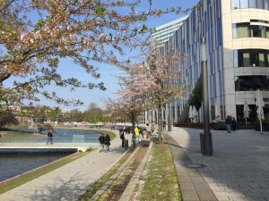 Cherry Blossom Düsseldorf Kö-Bogen #travel #germany #cherryblossom #sakura #thingstodo #weekend #vacation
