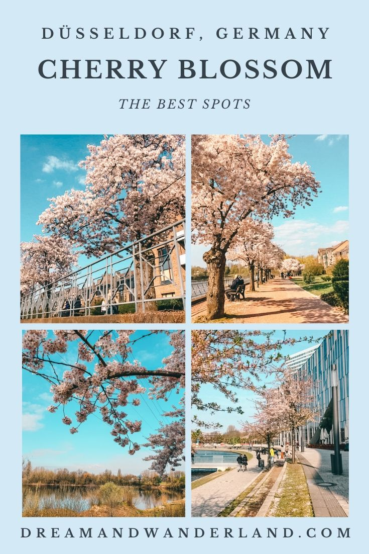 Travel to Düsseldorf, Germany during Cherry Blossom and find the best spots to watch Sakura! #hanami #thingstodo #spring #vacation #weekendtrip