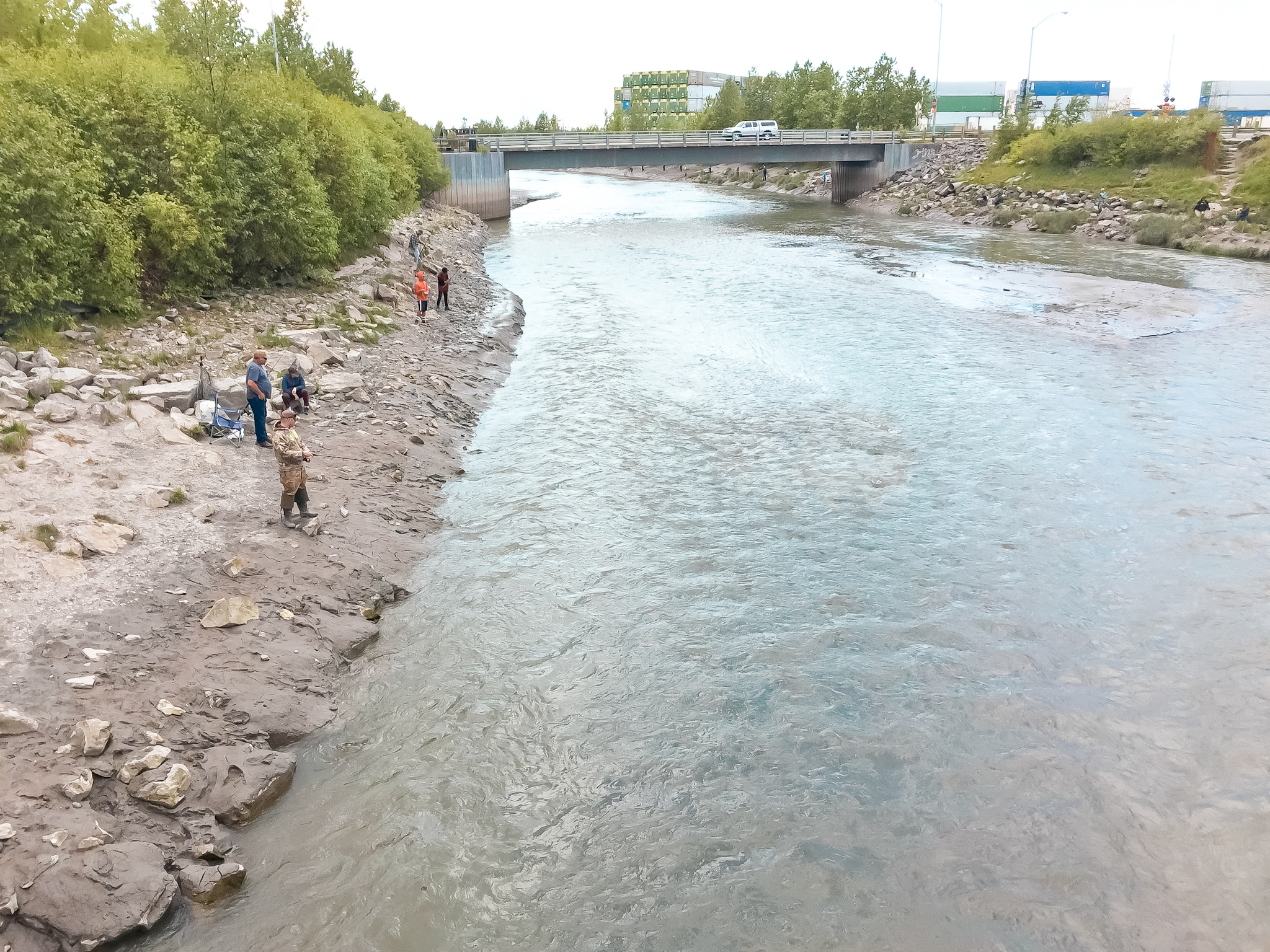 Salmon viewing at Ship Creek in Anchorage while traveling Alaska